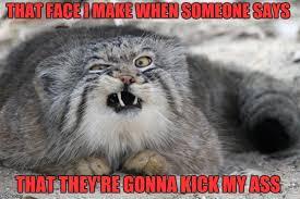Weird Cat Meme - weird cat with weird face imgflip