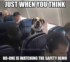 airline worker memes home facebook