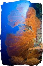 christmas island dive a natural wonder dive planet