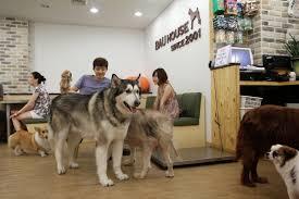 house dogs andrew goes to korea bau house dog cafe seoul weekend pt 6