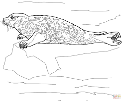 harbor seal coloring page free printable coloring pages