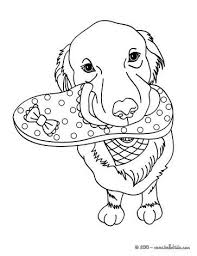 103 pets coloring pages images animal coloring