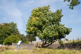 14 amazing irish trees to see before you die the daily edge