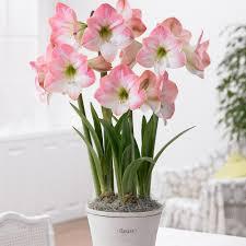 Indoor Flowers 7 Flowering Plants For Indoor Decorating