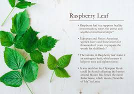 native american plants used for medicine raspberry leaf 101 traditional medicinals wellness teas
