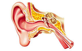 Attic Ear Anatomy What Causes A Retracted Ear Drum