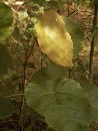Adaptations Of Tropical Rainforest Plants - adaptations of tropical rainfore