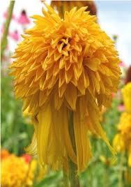 47 best flowers that love full sun images on pinterest flower