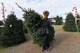 tree prices up amid shortage this season daily