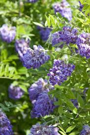 north texas native plants 958 best plants for houston images on pinterest landscaping