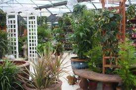 houseplants bark and garden center
