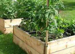 backyard best ideas about container vegetable gardening dunneiv