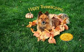 6 dogs that are in with thanksgiving