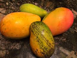 jamaican thanksgiving menu 20 jamaican mango names you may not know about