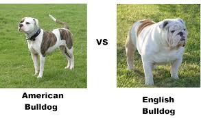 types of dogs two very very different breeds of dogs 96982464 added by