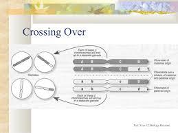 Dihybrid Crosses Worksheet 10 2 Dihybrid Crosses