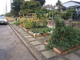 Front Yard Vegetable Garden Ideas Recycled Minds The Great Front Yard Vegetable Garden