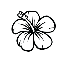 coloring pictures of hibiscus flowers hibiscus coloring page pristiname hibiscus coloring page realistic
