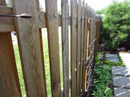 how to grow pole beans my urban garden oasis