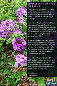 native louisiana plants 32 best super plants fall images on pinterest louisiana ag