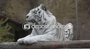 si e relax tigre che si trova e relax all aperto stock