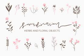 scandinavian herbs and flowers illustrations creative market