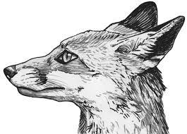 red fox silvercrossfox