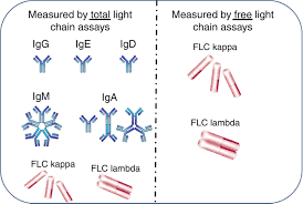 difference between kappa and lambda light chains living with abnormal free light chain ratios the myeloma crowd