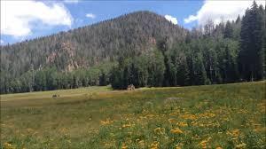 Utah forest images Pine valley mountains utah hiking signal peak hidden forest jpg