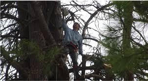 the tree service testimonials reviews