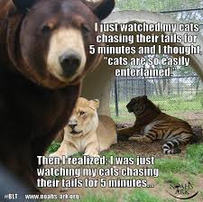 Tiger Meme - blt lion tiger bear bffs www noahs ark org lol meme animal