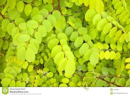 green leaves background stock image image 1623291