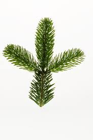 free images branch leaf evergreen christmas tree twig