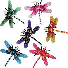exotic dragonflies u2013 ziggos party