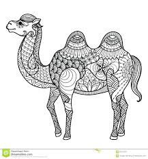 free printable camel coloring pages dromedary spider sheets