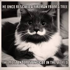 Hipster Cat Meme - a hipster cat that has a real mustache designtaxi com