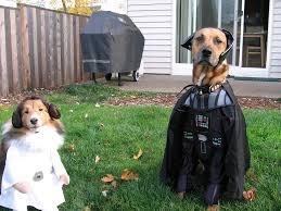 11 pets in u0027star wars u0027 costumes that are even cuter than ewoks