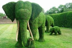 Bushes For Landscaping Shrubs And Bushes For Landscaping Pictures Ideas