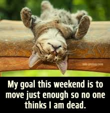 Lazy Day Meme - sometimes we need these types of days lols pinterest humor