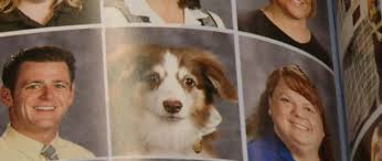 yearbook finder free service dogs at high school get adorable personal yearbook photos