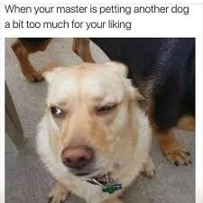 Much Dog Meme - dopl3r com memes when your master is petting another dog a bit