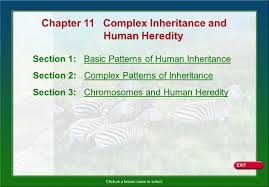 Anatomy And Physiology Chapter 11 Test Chapter 11 Complex Inheritance And Ppt Download