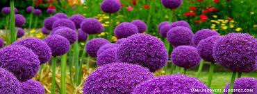 my india fb covers purple flowers in the garden flowers fb cover