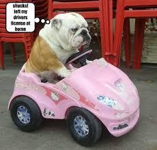 pk bookeemonster tough drive pink