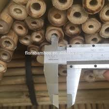 tonkin bamboo tonkin bamboo suppliers and manufacturers at