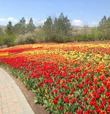 outdoors in utah tulip festival at thanksgiving point