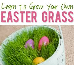 easter basket grass make your own real grass easter basket williamson source