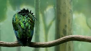 green colored bird wallpapers hd wallpapers