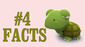 facts about sea turtles that will surprise you nursey rhymes