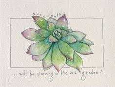 succulent sketch google search drawing pinterest sketches